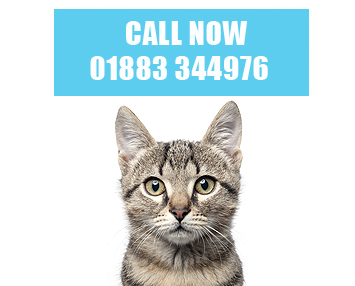 Cattery Surrey