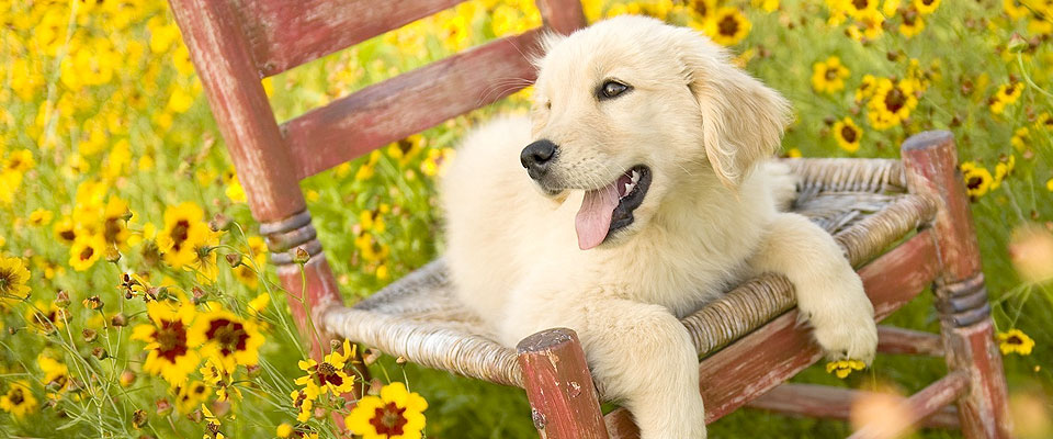dog-kennel-surrey1